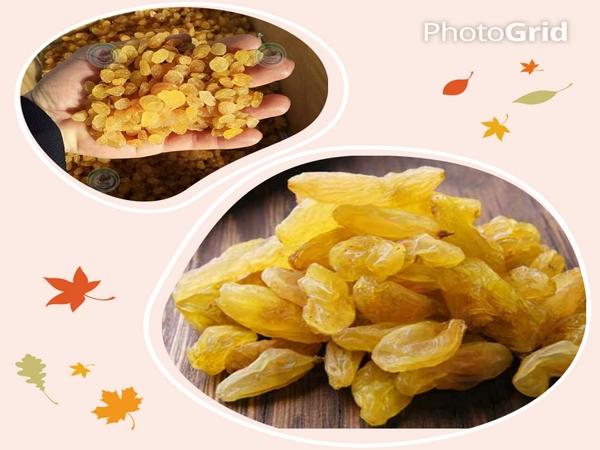 انواع کشمش زرد در ایران