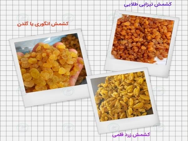 تولید کنندگان کشمش صادراتی