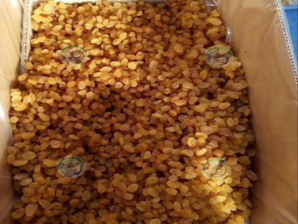صادرات کشمش انگوری طلایی بناب