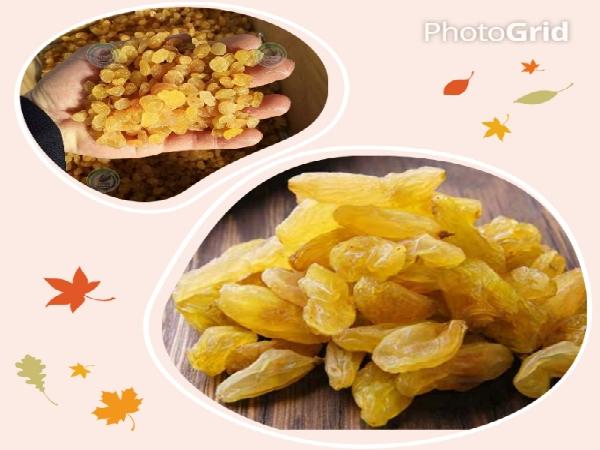 کشمش انگوری در ایران
