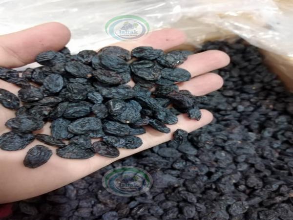 فروش کشمش مویز درشت با بهترین قیمت