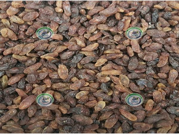 پخش کشمش آفتابی ارزان به قیمت روز