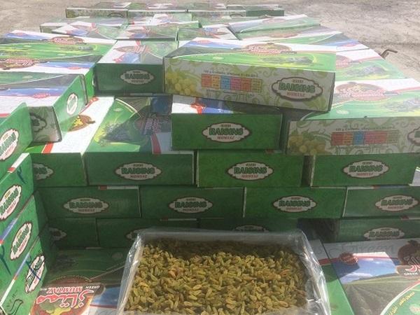 کارخانه کشمش سبز صادراتی این مجموعه
