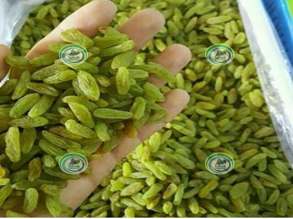 فروش کشمش ارگانیک سبز در بازار