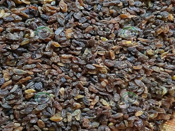 پخش کشمش آفتابی آبگیری بیدانه در بازار