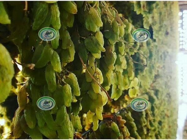 فروش کشمش سبز ارگانیک
