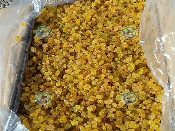 فروش کشمش گلدن انگوری کارخانه ملکان