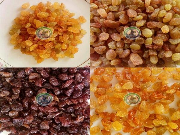 صادرات کشمش تاکستان