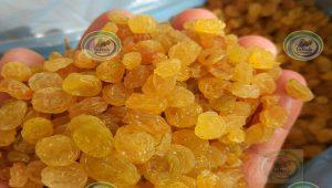 فروش کشمش گلدن انگوری