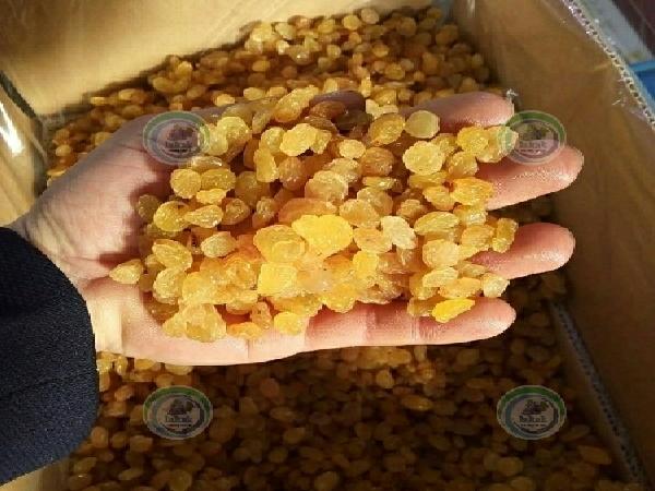 کارخانه کشمش پلویی طلایی صادراتی ملکان