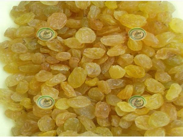 کارخانه بسته بندی کشمش انگوری ملکان