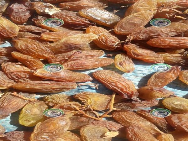فروشنده مویز درشت ریش بابا شیراز