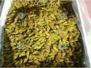 تولید کشمش سبز