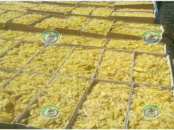 شرکت تولید و توزیع کشمش سبز و زرد