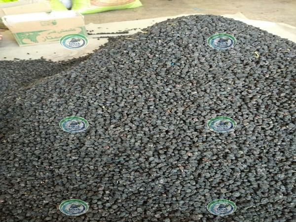 خرید مویز شاهانی زیر قیمت بازار